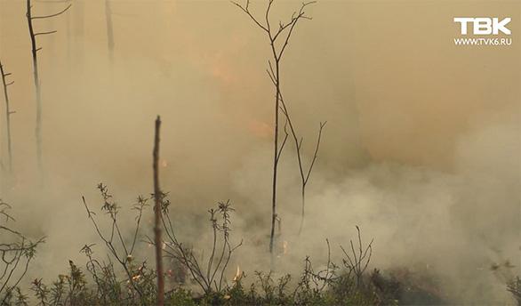 Cháy rừng, cáo đói chấp nhận gặm sôcôla - Ảnh 7.