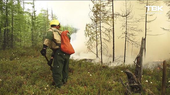 Cháy rừng, cáo đói chấp nhận gặm sôcôla - Ảnh 8.