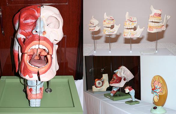 Đến Đại học Duy Tân học ngành bác sĩ răng - hàm - mặt - Ảnh 1.