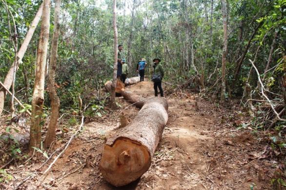 Chủ tịch xã lấy gỗ tang vật của lâm tặc... đem về nhà - Ảnh 1.