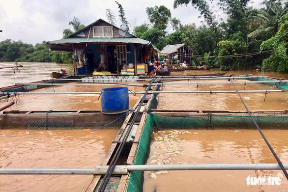 Di dời hàng trăm hộ dân khỏi khu vực ngập lụt ven sông Đồng Nai - Ảnh 1.