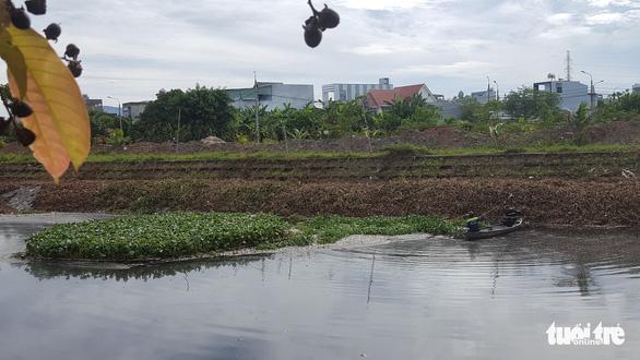 Cá chết trắng hàng tấn trên hồ Hòa Phú, Đà Nẵng - Ảnh 2.