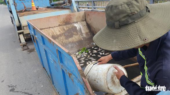 Cá chết trắng hàng tấn trên hồ Hòa Phú, Đà Nẵng - Ảnh 5.