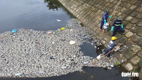 Cá chết trắng hàng tấn trên hồ Hòa Phú, Đà Nẵng - Ảnh 4.