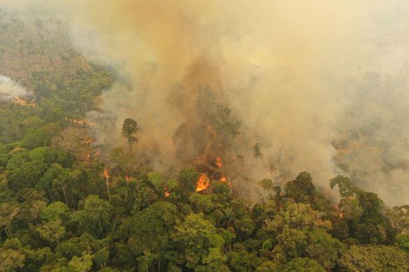 Cháy rừng tại Amazon đe dọa 265 loài động vật nguy cấp - Ảnh 1.