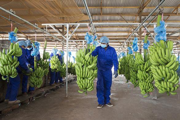 HAGL hướng tới mục tiêu xuất khẩu 1 tỉ USD trái cây - Ảnh 1.