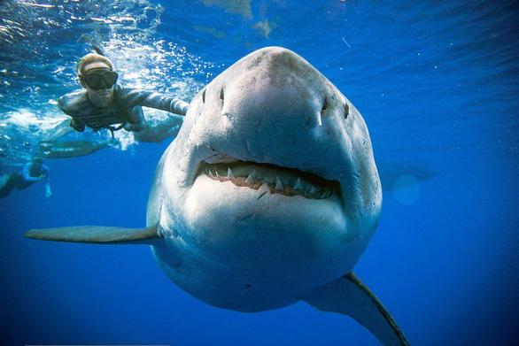 Đại dương ra sao nếu cá mập tuyệt chủng? - Ảnh 1.