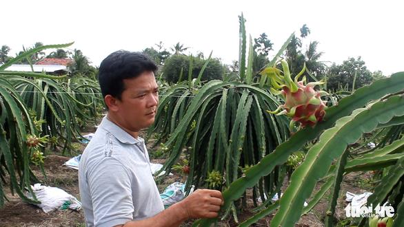 Việt Nam đứng đầu châu Á - Thái Bình Dương về sản lượng thanh long - Ảnh 2.