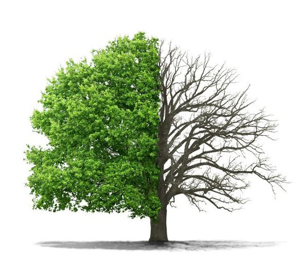 Biến đổi khí hậu, một số cây xanh nhả khí CO2 thay vì nhả Oxi