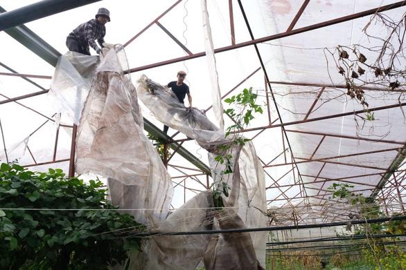 Người Đà Lạt dỡ nhà kính để trồng vườn truyền thống - Ảnh 2.