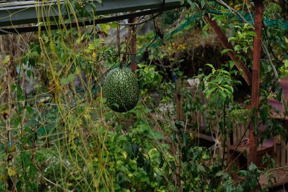 Người Đà Lạt dỡ nhà kính để trồng vườn truyền thống - Ảnh 3.