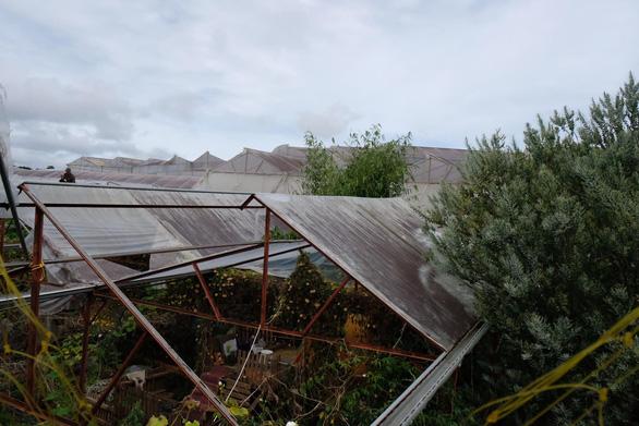 Người Đà Lạt dỡ nhà kính để trồng vườn truyền thống - Ảnh 4.
