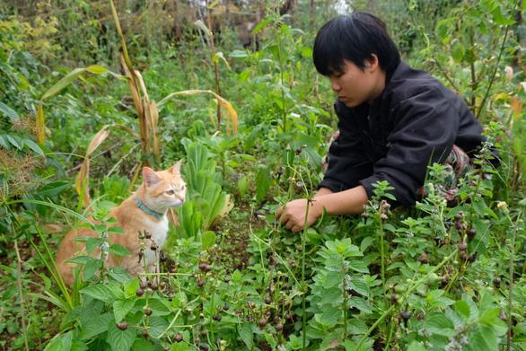 Người Đà Lạt dỡ nhà kính để trồng vườn truyền thống - Ảnh 7.