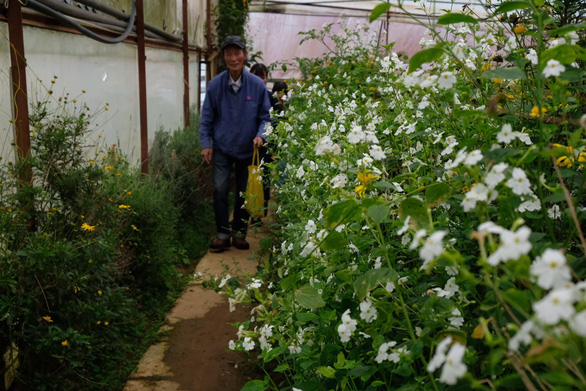 Người Đà Lạt dỡ nhà kính để trồng vườn truyền thống - Ảnh 8.