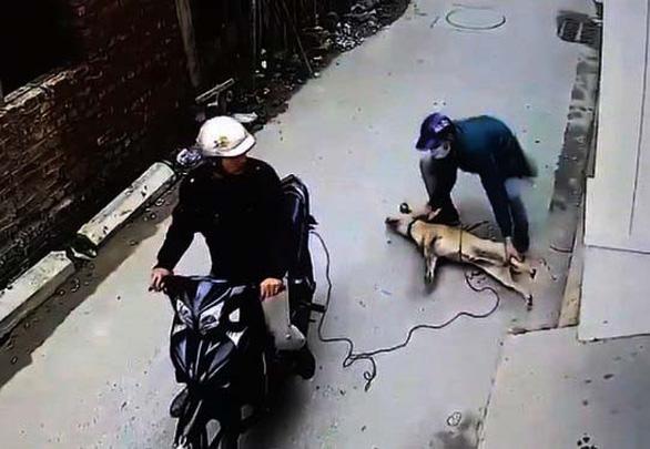 Bà con xứ Thanh ngẩn ngơ khi chỉ 1 đêm, 40 con chó bị cẩu tặc bắt trộm - Ảnh 1.