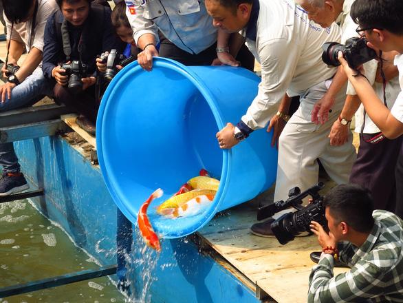 Thả cá Koi Nhật Bản xuống sông Tô Lịch - Ảnh 7.