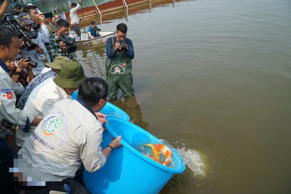 Thả cá Koi Nhật Bản xuống sông Tô Lịch - Ảnh 1.