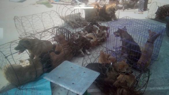 Từ đầu năm đến nay, nhóm nghi phạm ở Thanh Hóa trộm, tiêu thụ hơn 100 tấn chó - Ảnh 2.