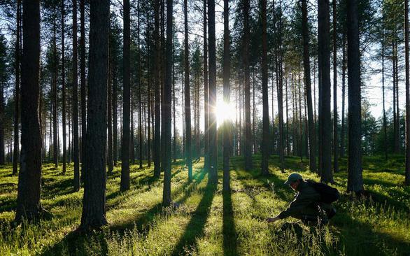 Trong một tối, dân Đan Mạch góp tiền trồng gần triệu cây xanh - Ảnh 1.