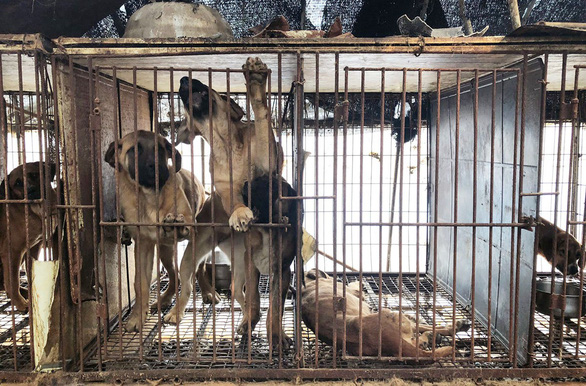 70% người Hàn nói không với thịt chó - Ảnh 1.