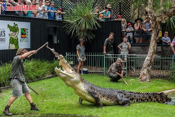 Tour Úc 5 ngày trọn gói giá từ 26,9 triệu đồng - Ảnh 5.