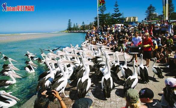 Tour Úc 5 ngày trọn gói giá từ 26,9 triệu đồng - Ảnh 6.