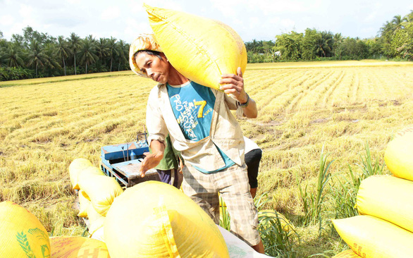 Chính sách trợ giá lúa gạo của Thái có ảnh hưởng đến Việt Nam?  - Ảnh 1.