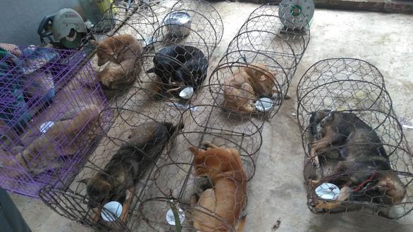 Liên minh bảo vệ chó châu Á chăm sóc đàn chó tạm giữ ở Công an Thanh Hóa - Ảnh 4.