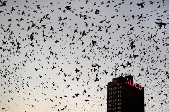 Nửa thế kỷ, riêng Bắc Mỹ mất 3 tỉ con chim - Ảnh 1.