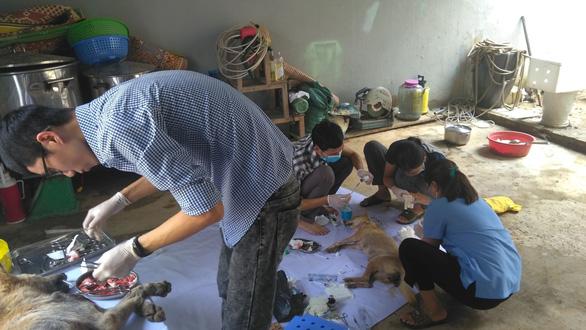Liên minh bảo vệ chó châu Á chăm sóc đàn chó tạm giữ ở Công an Thanh Hóa - Ảnh 2.