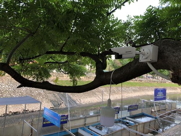 Cá Koi sông Tô Lịch có bảo vệ trông coi cả ngày lẫn đêm - Ảnh 1.