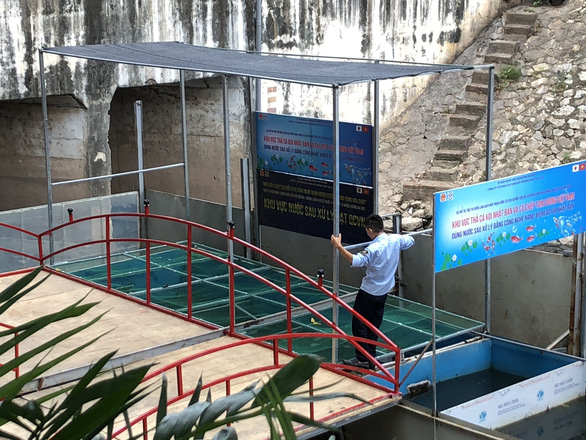 Cá Koi sông Tô Lịch có bảo vệ trông coi cả ngày lẫn đêm - Ảnh 3.