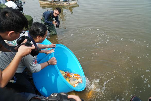 Cá Koi sông Tô Lịch có bảo vệ trông coi cả ngày lẫn đêm - Ảnh 5.