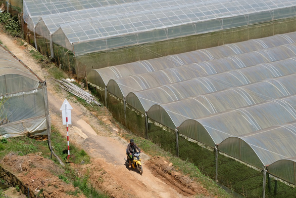Ngăn rủi ro từ phong trào nông nghiệp nhà kính - Ảnh 1.