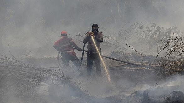 Cháy rừng: Indonesia mất bò 2 lần mới lo làm chuồng? - Ảnh 1.