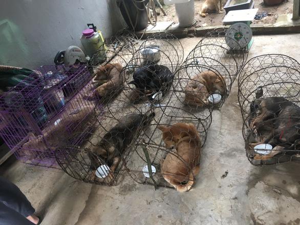 Một nhóm cẩu tặc chỉ hơn 8 tháng trộm mấy ngàn con chó - Ảnh 3.