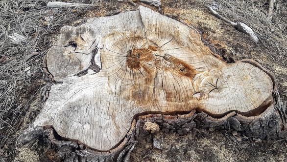 Dừng dự án điện gió chậm tiến độ 8 năm, để mất 140ha rừng - Ảnh 3.
