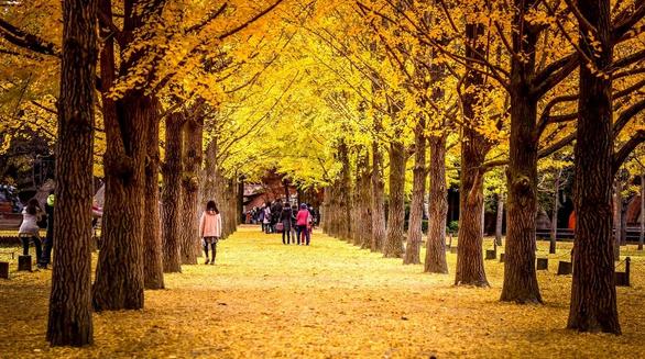 9 địa điểm tha hồ ngắm mùa thu ở châu Á - Ảnh 5.