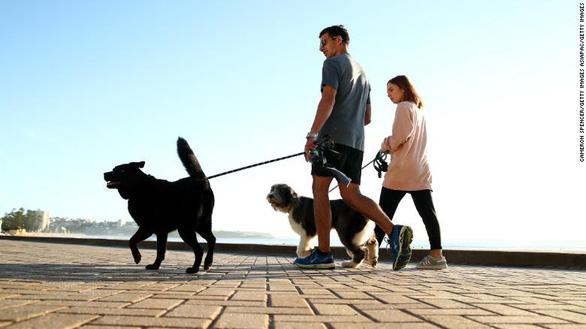 Bị phạt 2.700 USD nếu không dắt chó đi dạo mỗi ngày - Ảnh 1.