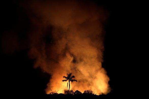 Rừng Amazon góp 20% khí oxy cho Trái đất, có đúng không? - Ảnh 3.