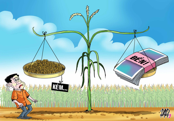 11 nông dân đi kiện lên tòa vì... lúa trổ bông không đều - Ảnh 1.