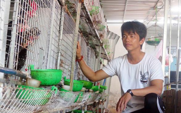 Cho chim nghe nhạc đẻ trứng rất sai, thu nhập 20 triệu đồng/tháng - Ảnh 1.