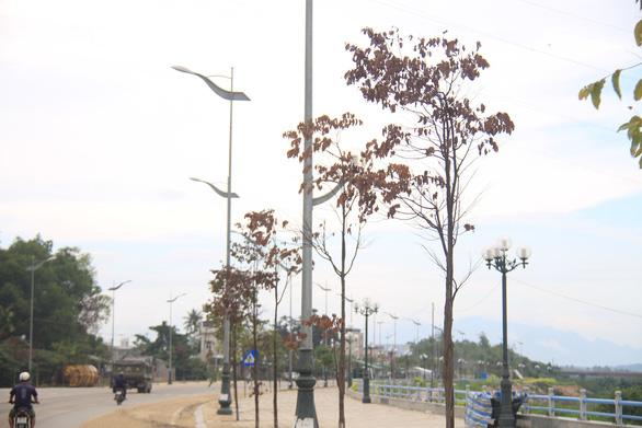 Cây xanh trên con đường đẹp nhất tỉnh chết hàng loạt sau 3 năm trồng - Ảnh 2.
