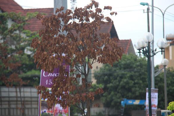 Cây xanh trên con đường đẹp nhất tỉnh chết hàng loạt sau 3 năm trồng - Ảnh 1.