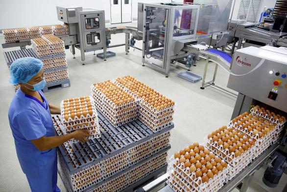 Indonesia diệt 10 triệu quả trứng gà để cứu... gà - Ảnh 1.