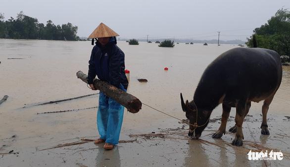 Bị nước lũ cô lập, người dân Hương Khê lo di dời tài sản, gia súc - Ảnh 8.