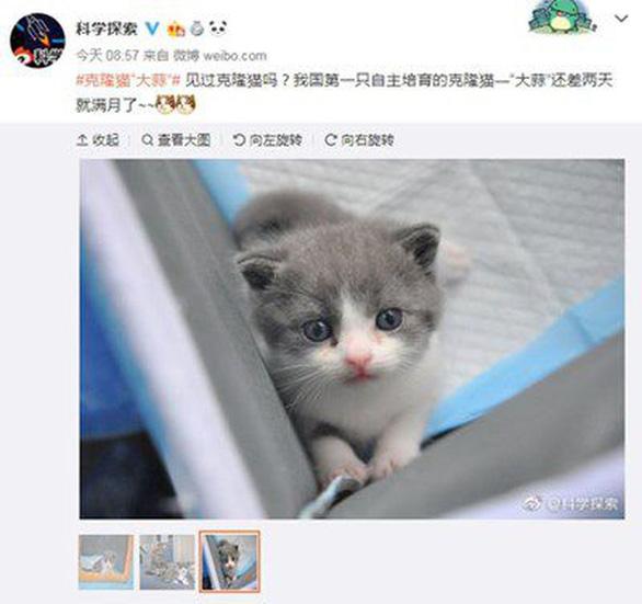 Củ Tỏi ngủm củ tỏi, doanh nhân 22 tuổi Trung Quốc chi 35.400 USD nhân bản mèo cưng - Ảnh 3.