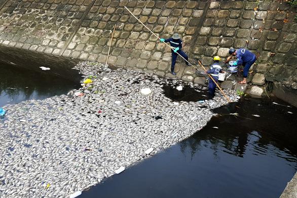 Vụ cá chết ở hồ Hòa Phú: hàm lượng oxy thấp hơn ngưỡng cho phép - Ảnh 1.