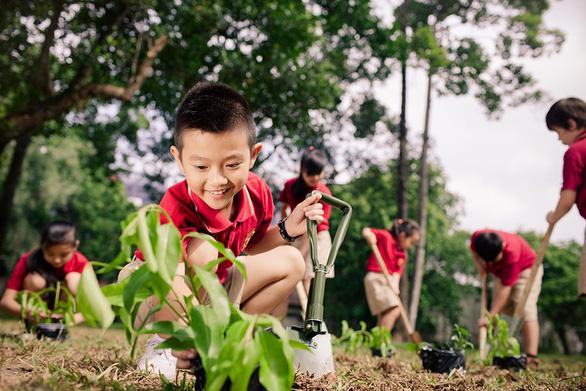 Mùa khai giảng xanh ở VAS - Ảnh 4.