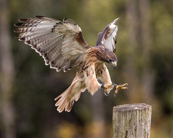 Nghe tiếng chim diều hâu, sóc run lên, đứng thẳng 2 chân hoặc bỏ chạy - Ảnh 2.